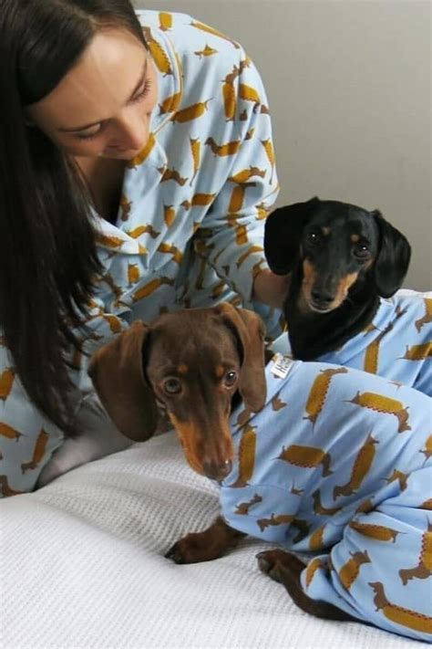 Sausage Dog Central | Power Pets - Animals with Influence