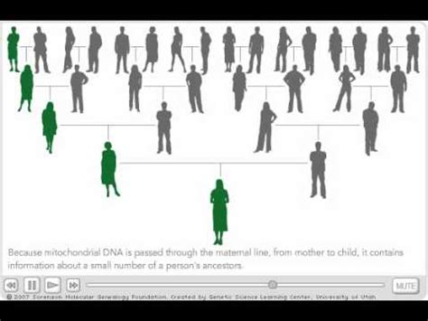 Mitochondrial DNA - YouTube