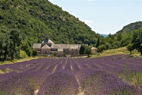 Where to see lavender fields in france