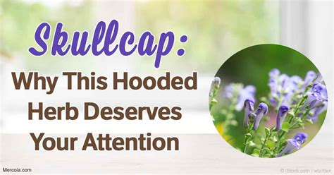 What Are the Benefits and Uses of Skullcap?