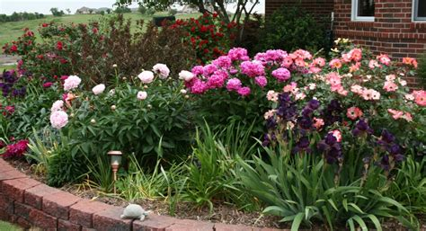Garden Musings: The Other Front