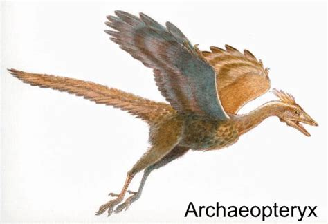 Feathered Dinosaurs - Facts for Kids