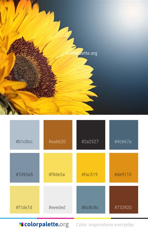 Flower Sunflower Yellow Color Palette   colorpalette