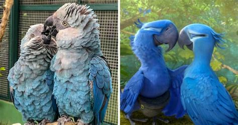 """""""Rio"""" The Movie's Blue Macaw Parrot Is Now Officially"""