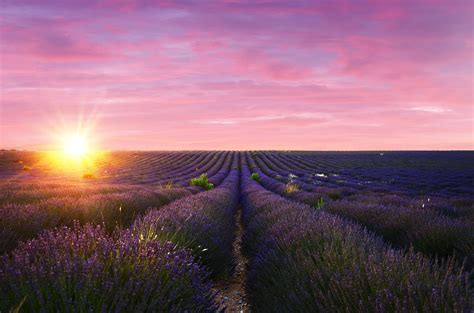 Visiting the Lavender Fields of Valensole, France | The
