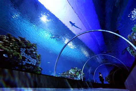 Blue Planet Aquarium Reopens to Become Northern Europe's