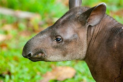 Overhunting Rainforest Animals Makes Climate Change Worse