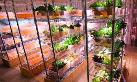IKEA's Space10 is creating on-site aquaponic farms for