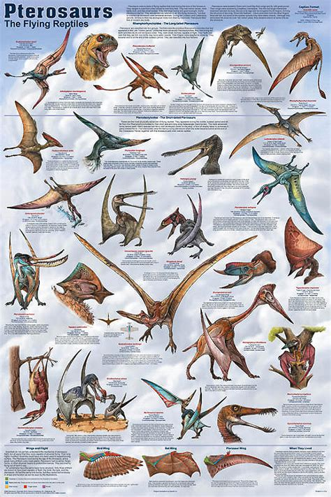 Pterosaurs - gint flying reptiles