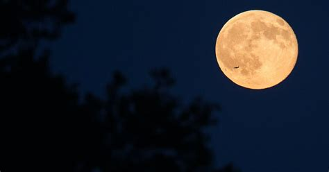 You need to see the Harvest Moon in the night sky Thursday