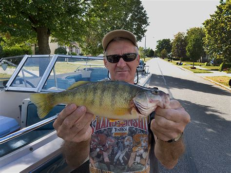 Perch Fishing Lake Erie - All About Fishing