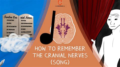The Cranial Nerves mnemonic song - memorization made easy