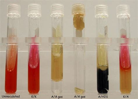 Lab Practical Questions - Microbiology 1 with Buchanan at