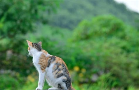 Warrior Cat Images | Tabby Calico