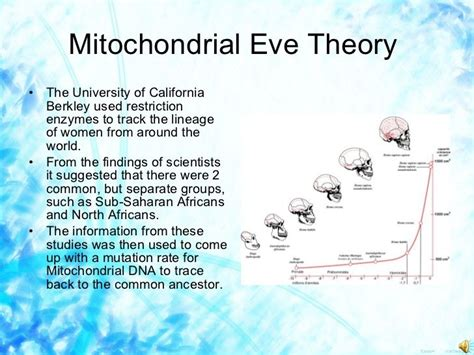 mitochondrial eve | mitochondrial eve theory ul li the
